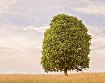Solitary Green Tree Photograph   Landscape Physical Print