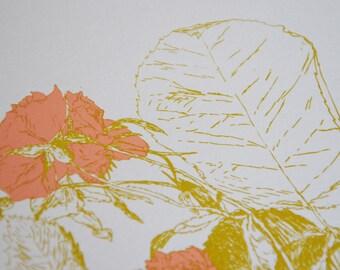 Salmon pink roses variable edition silkscreen print on paper by Gabi Bano