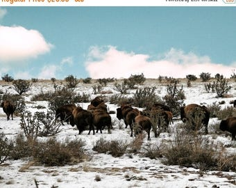 FLASH SALE til MIDNIGHT Bison in the snow no 1 FineArt 8x10 photograph