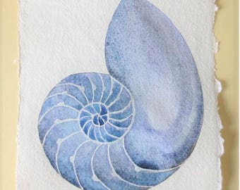 Sea shell chambered nautilus cross section original watercolour painting natural history illustration beach style coastal decor