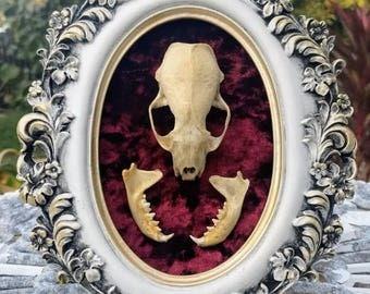 Real Mink Skull & Jaws on Velvet in Frame