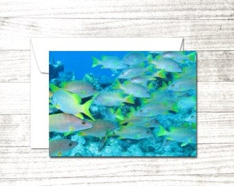 School of Fish Greeting Card | Blank Note Card |Underwater Dive Art Card | School of Snappers card | Card for Scuba Diver | Underwater Art