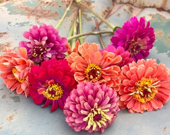 Premium Zinnia Flower Mix, Cut Flower Garden Zinnias, Heirloom Zinnias For  Market Gardens And