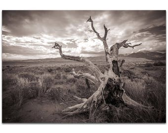 Film Noir Wall Art 'Knotty Valley' by Meirav Levy - Black & White Photography Dramatic Landscape Decor on Metal or Plexiglass