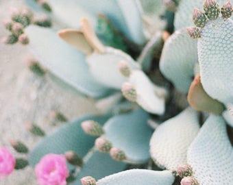 8 x 12 // Film Art Print // film Photograph // Cactus in Joshua Tree