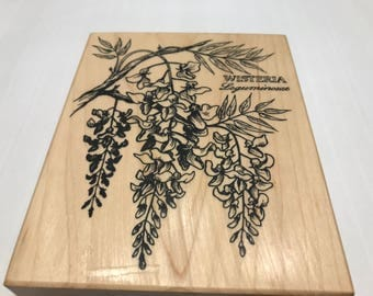 LARGE Wisteria Flowers Rubber stamp, 100 mm (BB4/2)