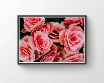 Pink Flowers Wall Art Print, Home Decor, Nature Photography, Wall Art, Farm House Decor, Gift for Her, Large Wall Art, Garden Art