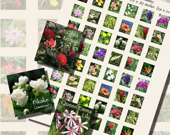 Flowers of Hawai'i, SCRABBLE TILE SIZE (.75 x .83 Inches or 19 x 21 mm), 24 Illustrations Included