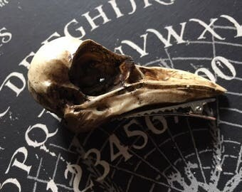 Crow Skull Hair Clip