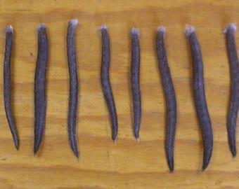 12 Muskrat Tails