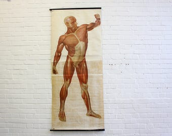 Large German Canvas Anatomical Chart Circa 1950s