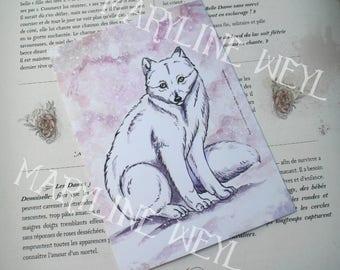 map postcard polar Fox