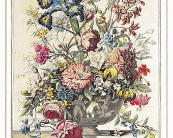 June vintage botanical art print Winterthurs 12 months of flowers Robert Furber wedding anniversary newborn baby gift idea 7.5 x 10 inches