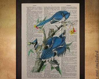 SALE-SHIPS Aug 22- Blue Jay Dictionary Art Print Audubon Bird Wall Art Fine Art Print Home Decor Fine Print book da475