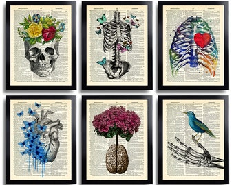 Cool anatomy posters