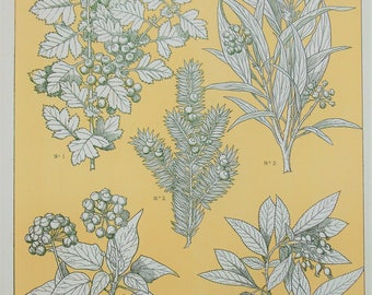 Owen Jones - The Grammar of Ornament - Stunning 1800s Lithograph - Leaves from Nature (P97)
