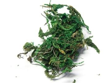 Natural green Moss (4x6cm) bag