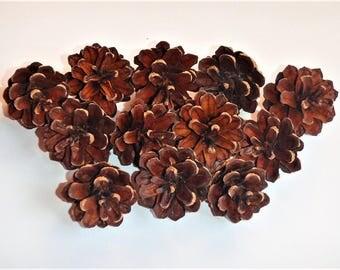 Pinecones *  For Crafts * Handmade Crafts * Christmas Decor * 20 pcs Pinecones