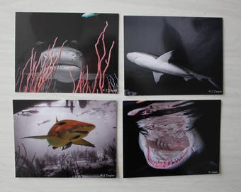 SHARK POSTCARDS - set of 4 - FREE Shipping Worldwide