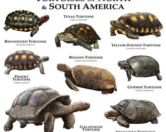 Tortoises of North, Central and South America