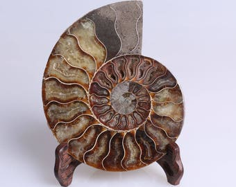 Split Ammonite Fossil Specimen Shell Healing Madagascar,Natural Home Decor+ Free Wenge Stand J506L
