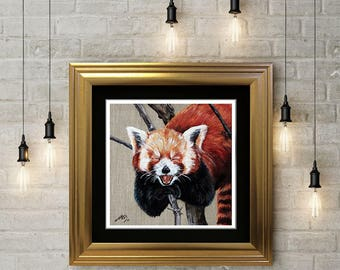 Limited Edition Giclée Art Print - Red Panda - Print with Black Mount - From Original Panda Painting - Nature Print - Panda Print - Cute
