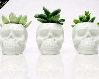 Day of dead Skull Planter , Succulent planter, Cactus planter, Indoor Plant pot, Human Skull Decor, Skull Head Planter, Cactus Planter Gift
