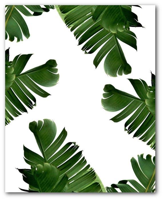 impression de feuille de bananier feuille tropicale abstrait. Black Bedroom Furniture Sets. Home Design Ideas