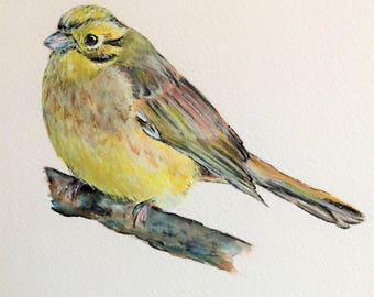 "Yellowhammer 12"" x 10"" Original watercolour painting"