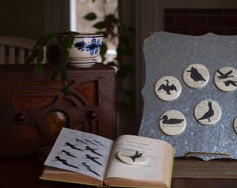 Bird Magnets on Book Paper