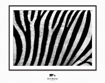 Zebra Photography Print Monochrome Minimalist Wall Art Animal Poster Black and White Decor Modern Art Printable Instant Download Digital Art