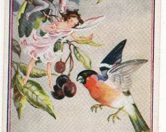 Vintage Rene CLOKE Postcard, FAIRIES and BULLFINCH,Cherries,1956,C W Faulkner