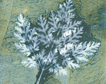 Original Unique Botanical Art Cyanotype Print of Wildflower Leaf