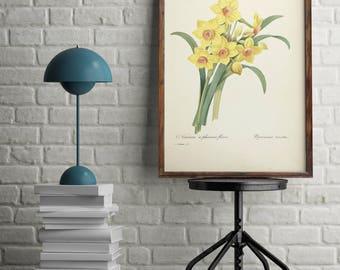 Antique print flowers, Yellow flower print, wall art decor, Botanical print, Home Office decor poster, Vintage illustrations poster