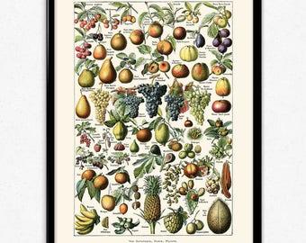 Fruit Illustration Vintage Print 3 - Fruit Poster - Fruit Art - Kitchen Decor - Kitchen Art - Home Decor - Botanical Science - Larousse