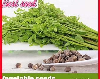 10pcs/bag Moringa seeds, Edible herbal vegetables tree seeds for home garden