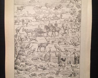 Europe animals - Antique French Dictionary Page - Original 1940s Illustrated Lithograph