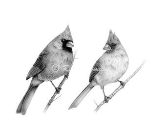 Archival Fine Art Giclée print of original bird pencil drawing, Cardinals