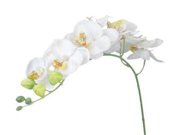 White orchids Phalaenopsis Artificial