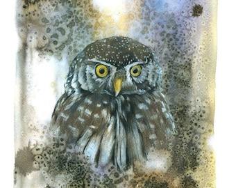 Eurasian Pygmy-owl-Pygmy Owl-Glaucidium