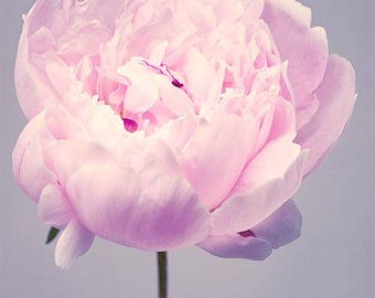 Flower Portrait Photography, Peony Photography, Girls Room Wall Art, Pale Pink, Large Wall Art, Botanical Print, Fine Art Photograph