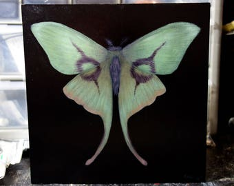 "ORIGINAL Alice Cooper Moth painting, 6x6"", oil on panel, faux taxidermy"