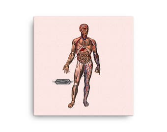 Antique Reproduction Anatomical Canvas Print | Viscera in Position