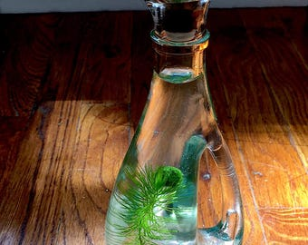 SALE! Live Marimo Moss Ball Mini Cruet Terrarium Unique Kitchen Decor
