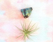 Unique Hanging Planter, Labradorite Crystal Air Plant Holder,  Indoor Planter,  With Or Without Plant, Crystal Wall Decor, Boho Magical Gift
