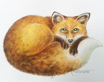 10x8  Original Watercolour red fox.. NOT A PRINT ..Original Painting fine art9