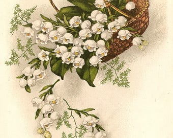 Lily of the Valley Falling from Basket Antique French Postcard Chromolithograph Litho Chromo Post Card from Vintage Paper Attic