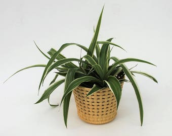 Cream/Yellow Dialene Plastic Bamboo Style Planter