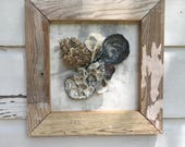 Framed Oyster Shell Wall Art/Beach House Seashell Art/Coastal Reclaimed Wood Art