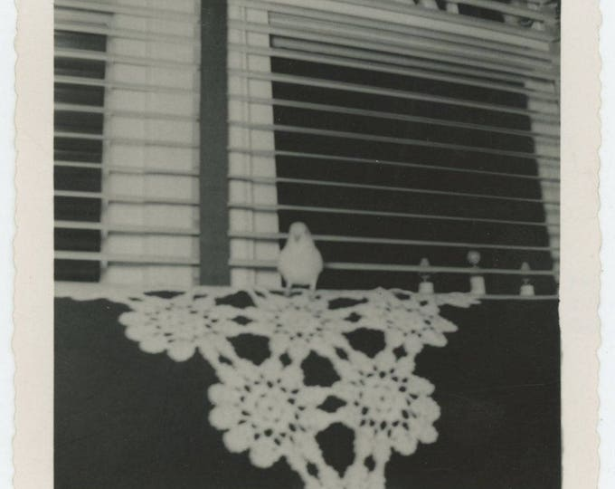 Vintage Snapshot Photo: Bird on a Couch, c1950s (711621)